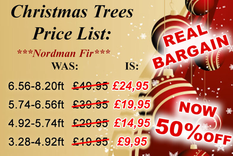 Real Christmas trees for sale Bristol