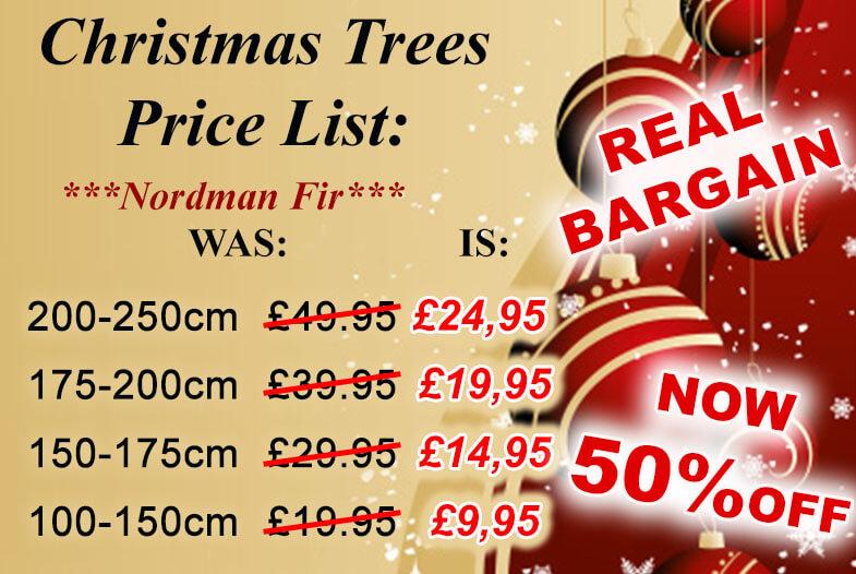 Christmas tree for sale Bristol